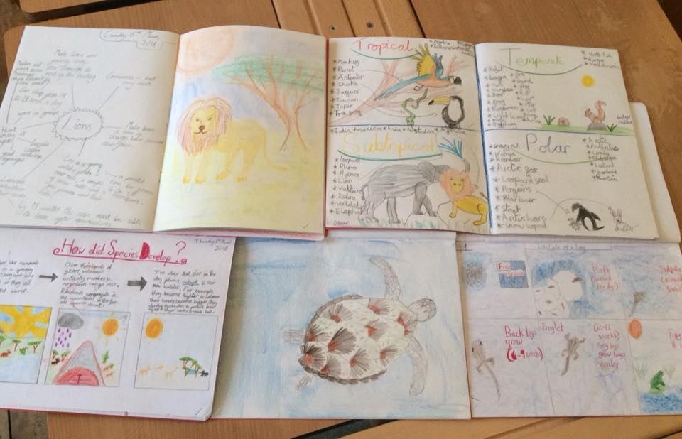 picture of childrens work books, showing drawings of Lions, turtles etc and written work