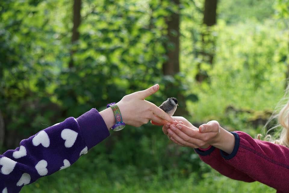 Two children's hands holding a small garden bird.